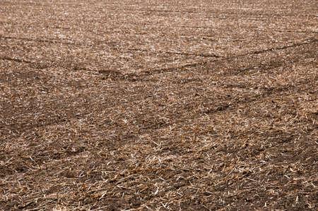 harvested: Harvested Field