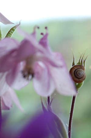 fleurs romantique: Romantic Flowers and snail shell