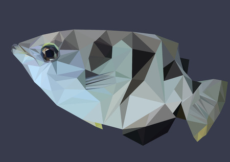 archer fish: Abstract Low Poly Fish, Archer fish - Vector Illustration Illustration