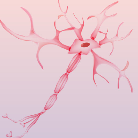 nerve: Neuron, nerve cell - Vector Illustration Illustration