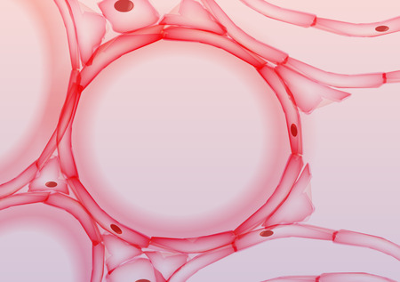 bronchiole: Alveoli in Lungs Tissue Slice, Cross section - Vector Illustration
