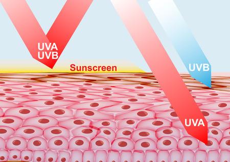 Loción de protección solar en la protección de la piel contra los rayos UVA, UVB - ilustración vectorial