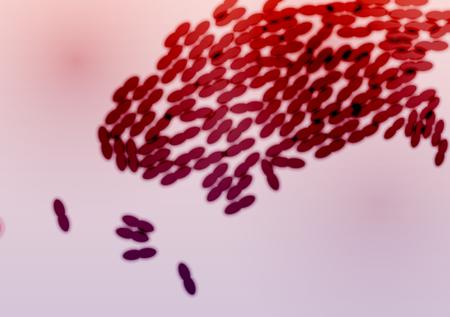 Bactéries Colony - Illustration Vecteurs