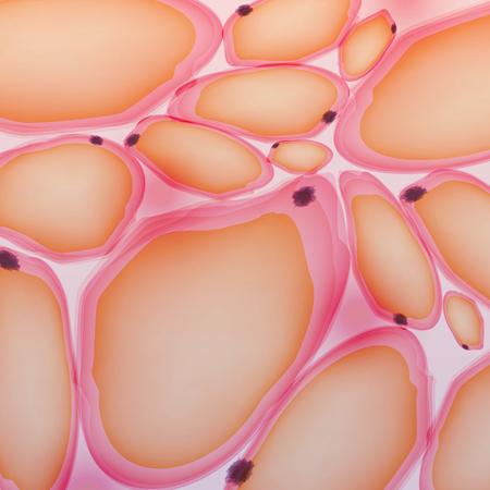 celulas humanas: El tejido adiposo, células de grasa, adipocitos - Ilustración