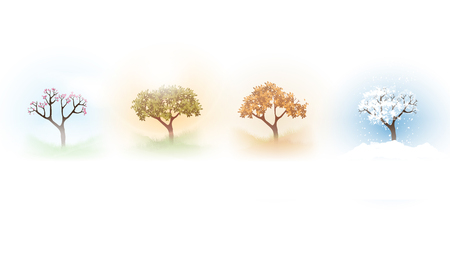 Vector illustration of a tree in four different seasons.