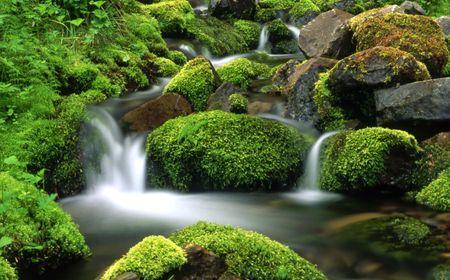 strumień: Górski strumień Zdjęcie Seryjne