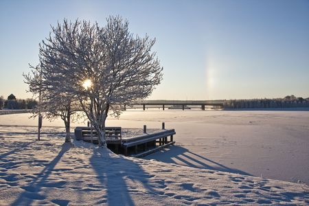 Beautiful winter landscape with snowy trees and sunshine photo