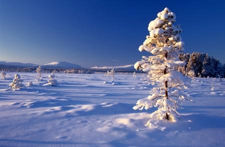 햇살에 큰 냉동 된 나무의 아름 다운 겨울 풍경 스톡 콘텐츠