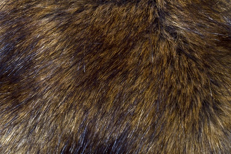 Background of lynx fur closeup   photo
