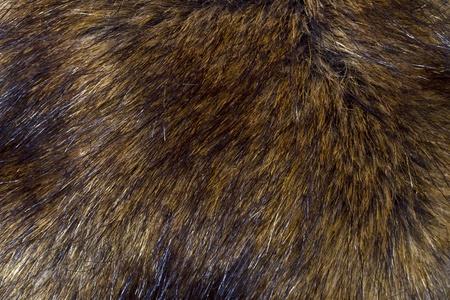 Hintergrund der Lynx Pelz closeup
