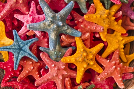 Beautiful and colorful starfish background photo