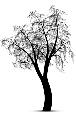 winter tree: Abstract winter tree isolated on white background