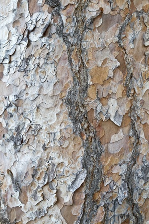 corroded: Tree bark texture background