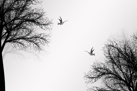 Abstract trees and birds background
