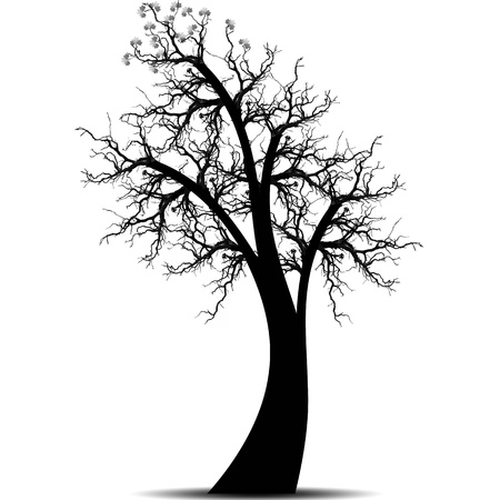 Beautiful art tree isolated on white background Stock Vector - 11095808