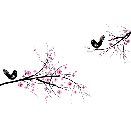 cherry blossom: Beautiful blossom cherry and birds isolated on white background