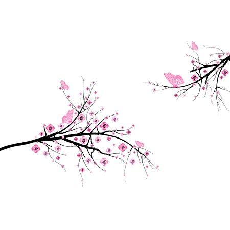 blossom tree: Beautiful blossom cherry and butterfly isolated on white background