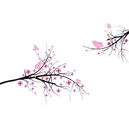 flores cerezo: Hermosa flor de cerezo y de mariposas sobre fondo blanco