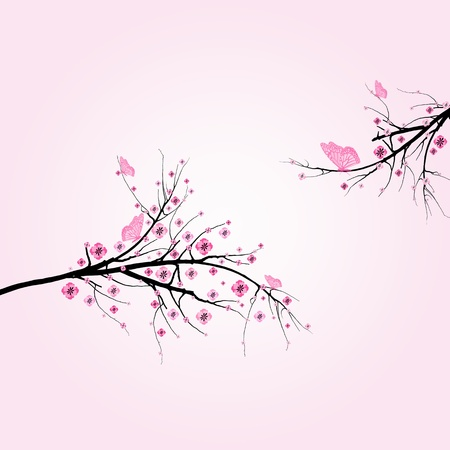 Beautiful blossom cherry and butterfly isolated on pink background  Vector