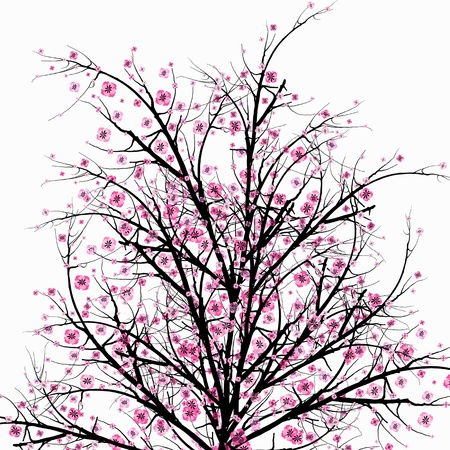 Beautiful blossom cherry isolated on white background  Vector
