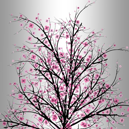 Beautiful blossom cherry isolated on gray background  Vector