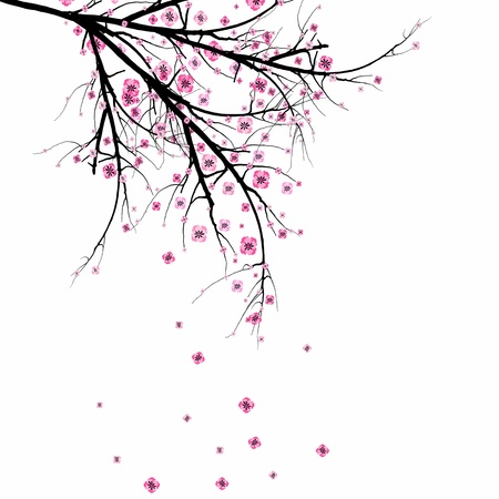 Beautiful blossom cherry isolated on gray background