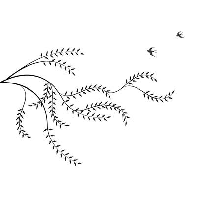 sauce: Rama de sauce y las aves aisladas sobre fondo blanco