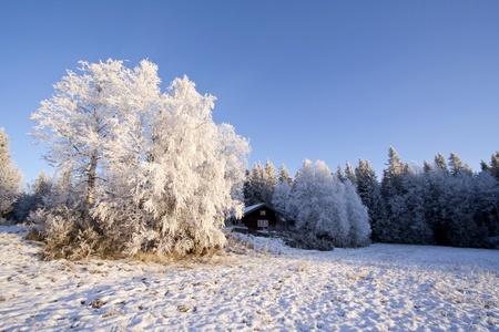 Beautiful winter landscape in Sweden Stock Photo - 11884098