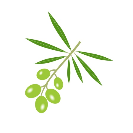 Olive branch isolated on white background Vector