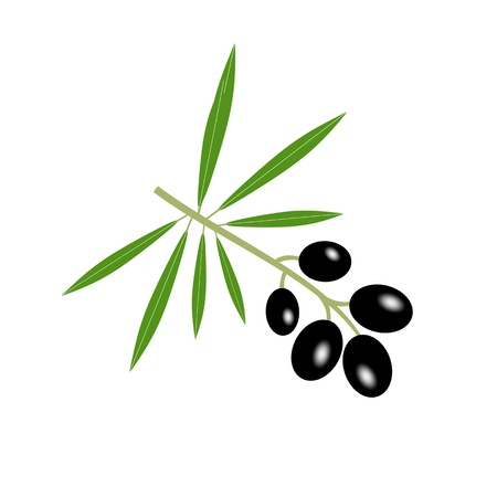 Olive branch isolated on white background Stock Vector - 12085306
