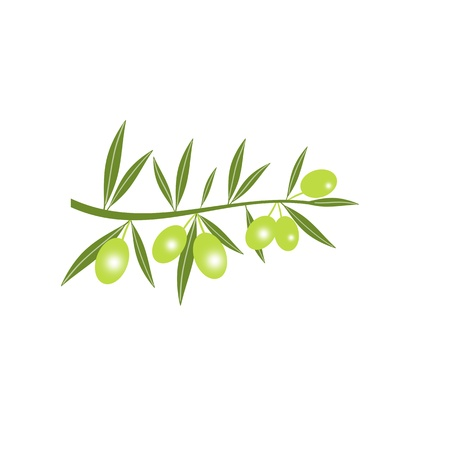 Silhouette of green olive branch isolated on white   Vector