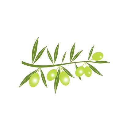 rama de olivo: Silueta de la rama de olivo verde aislado en blanco Vectores