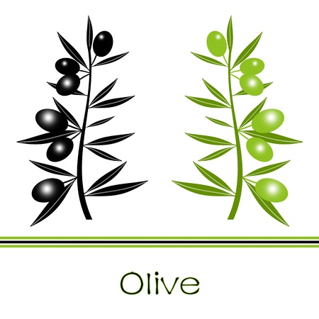 Silhouette of black  and green olives branch 