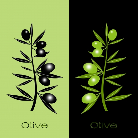 Silhouette of black and green olives branch  Stock Vector - 12336886