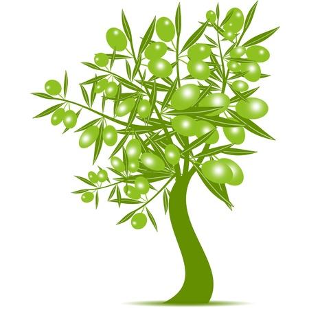 트렁크스: 그린 올리브 나무는 흰색 배경에 고립 일러스트