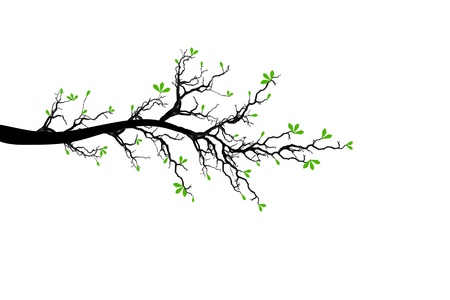 Branch of spring tree isolated on white background Stock Vector - 12636237