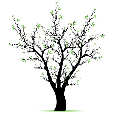 Beautiful spring tree isolated on white background Stock Vector - 12636239