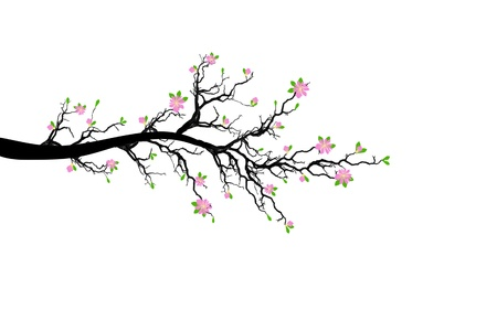 branch tree: Branch of spring tree isolated on white background