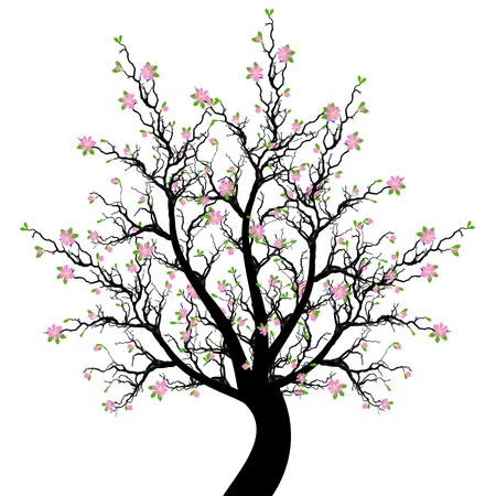Beautiful spring blossom tree isolated on white background Vector