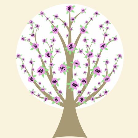 cherry blossom tree: Beautiful cherry blossom tree isloated