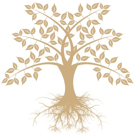 Beautiful art tree isolated on white background Stock Vector - 13565876