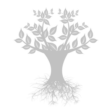 planta con raiz: El arte hermoso �rbol aislado sobre fondo blanco