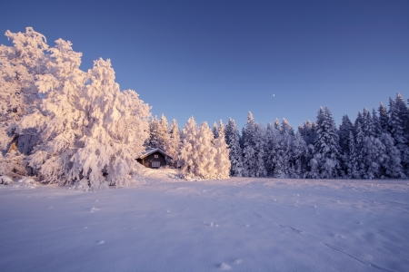 Beautiful winter landscape in Sweden photo