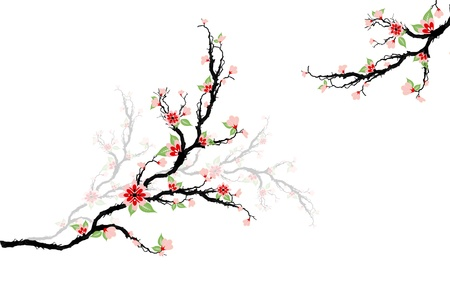 cherry pattern: Beautiful cherry blossoms tree isolated on white