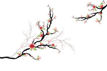 flores cerezo: Hermoso �rbol flores de cereza aislado en blanco Vectores