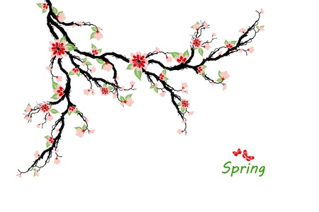 Spring cherry blossom tree isolated on white background Stock Vector - 17587711