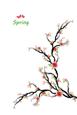 Spring cherry blossom tree isolated on white background Vector