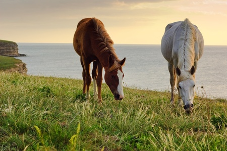 kasztany: Two horses grazing on the green lush meadow near the sea