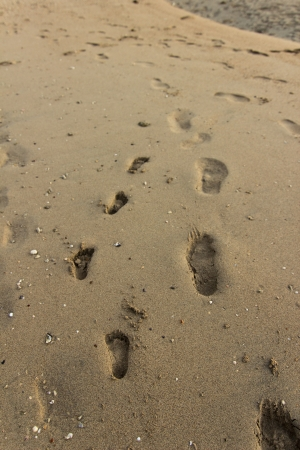 adult footprint: Adult and child footprints in the sand