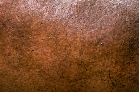 hippopotamus: La piel de hipopótamo